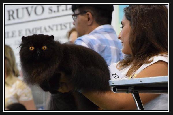 expo-felina-di-siena-2016
