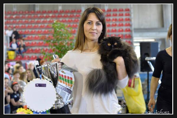 expo felina di Prato